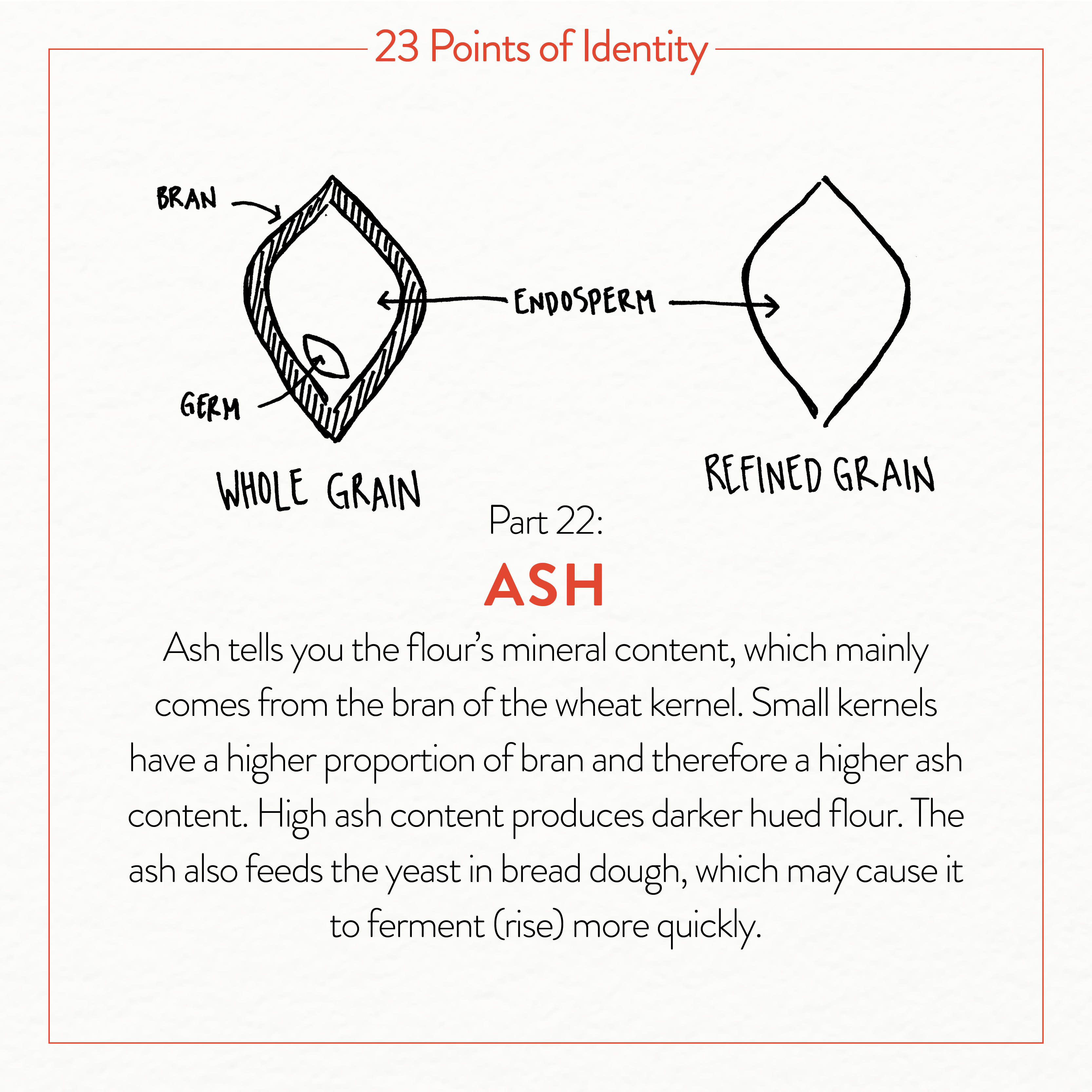 Our 23 Points of Identity Maps Grain's Journey from Seed to